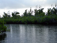 cayman mangrove channel
