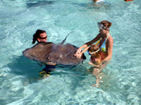 admiring the Stingrays at Stingray City
